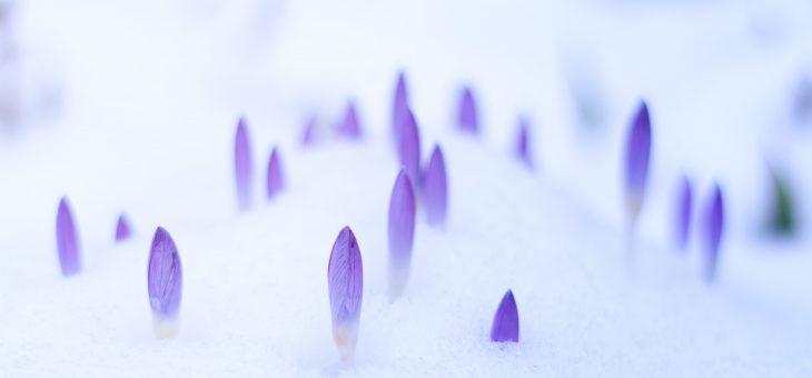 Våren – Förnyelsen